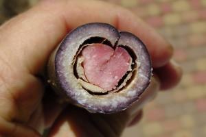 Samenkapsel / durchgeschnitten