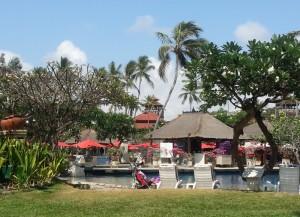 Plumeria Rubra Winterruhe Bali
