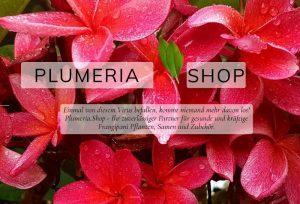 Plumeria.Shop